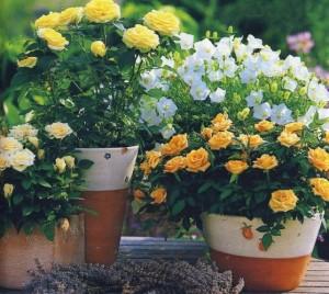 Правильный полив домашних растений.
