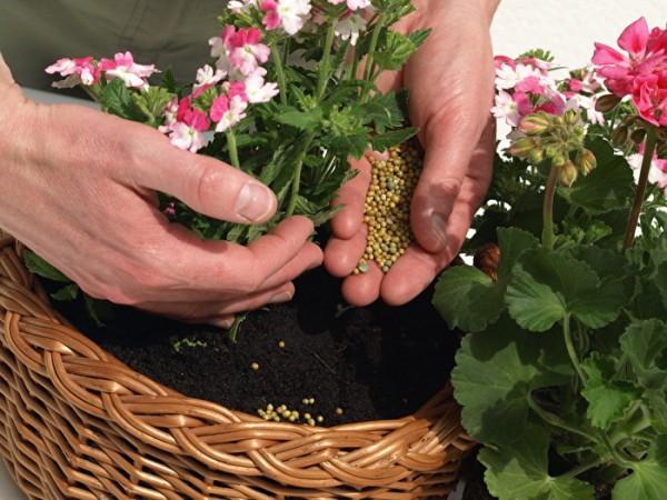 Удобрения и растения правильная их
