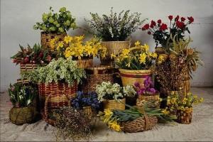 Что символизируют цветы в доме?