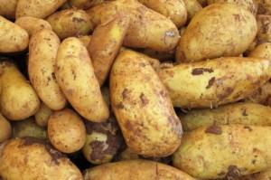 Проращиваем раннюю картошку