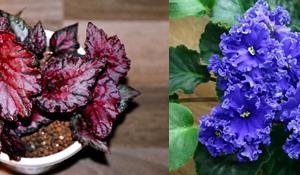 Разведение цветов