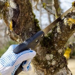 Избавление садовых деревьев от грибных заболеваний