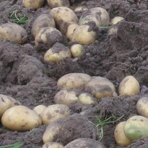 Советы по борьбе с вредителями сада