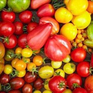 Семена или рассада для выращивания томатов