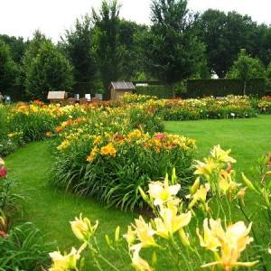 Лилейники в Вашем саду