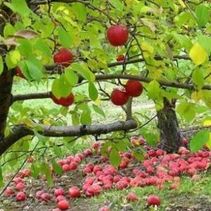 Августовские работы в саду.
