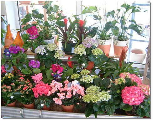 Какие должны быть цветы в квартире