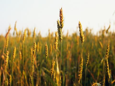 Растения - удобрения, незаменимые помощники для почвы